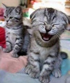 There are thousands of funny internet sites around the internet that you can visit to make you laugh, giggle and even cry (with laughter of course)....