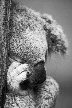 So cute ? : So cute ? Cute Baby Animals, Animals And Pets, Funny Animals, Beautiful Creatures, Animals Beautiful, Australian Animals, Mundo Animal, Tier Fotos, Wild Nature