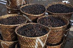 Separation of açaí pulp from seeds in market (Mercado Ver-o-Peso) Belém, Pará Brazil