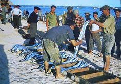 Sesimbra - Pescadores de peixe espada branco.