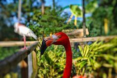 Flamingo by Vencislav Stanchev on 500px
