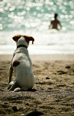 """""""The hardest part about sharing your life with a dog is the final farewell"""" -David Darcy ♡♡"""