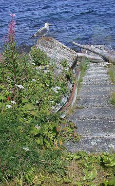 Seagull Steps Guard Island Alaska by Bellesouth Studio