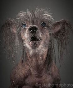 Old Faithful: Warm and Intimate Photos of Really Old Dogs. by Pete Thornton - an interesting and touching project to read about, wonderful portraits to see