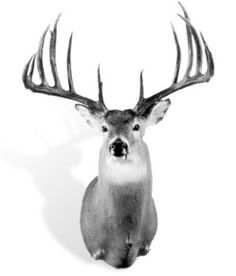 The Hanson buck is still my favorite world record whitetail.
