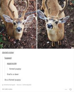 28 Times Tumblr Was Home to the Funniest Animal Jokes Ever | Blaze Press