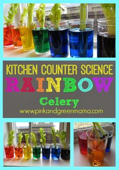 Kitchen Counter Science with Kids: Rainbow Celery Experiment