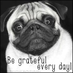 Living Life Happy 2day #quotes / pug cuteness