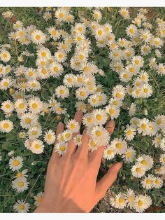 Spring Aesthetic, Nature Aesthetic, Flower Aesthetic, Aesthetic Vintage, Belle Aesthetic, Aesthetic Green, Aesthetic Photography Nature, Beautiful Nature Photography, Simple Aesthetic