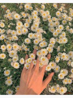 Spring Aesthetic, Nature Aesthetic, Flower Aesthetic, Aesthetic Vintage, Belle Aesthetic, Aesthetic Photography Nature, Beautiful Nature Photography, Aesthetic Green, Simple Aesthetic