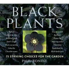Black plants and flowers for a hauntingly dramatic and gothic garden!