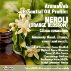 Neroli Essential Oil Profile