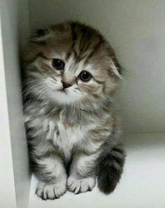 Adorably sad expression