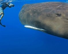 Whale: Face to Face
