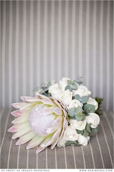 As Sweet As Images are Wedding Photographers Based in Auckland. Specialising in Capturing Romantic, Emotion-Filled, & Vibrant Wedding Images. Protea Wedding, Wedding Bride, Wedding Bouquets, Bride Flowers, Wedding Details, Wedding Photos, Floral Wreath, Roses, Wedding Photography