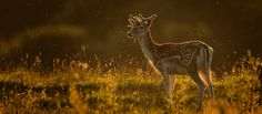 Join me on a Deer Rut Photography Workshop in October, the peak time for the rut. This will be a fantastic opportunity for any wildlife photographer. Deer Rut, Hunting Painting, Fallow Deer, Image Review, Close Proximity, Red Deer, Yearly Calendar, Photography Workshops