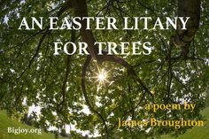 An #Easter Litany for the #Trees, follow the link to read the whole poem by James Broughton