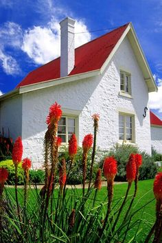 red roof and red hot pokers