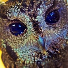 White Wolf : Zeus, The Blind Rescue Owl, Has Galaxies in His Eyes (With Exclusive Videos)