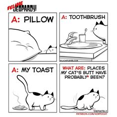 This is 'Feline Jeopardy' How To Cat, Todays Comics, Non Sequitur, Calvin And Hobbes, Comics Online, Comic Strips, Kitty, Lol, Cats