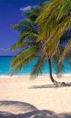 Seven Mile Beach, Grand Cayman island  http://www.vacationrentalpeople.com/vacation-rentals.aspx/World/Caribbean/Cayman-Islands