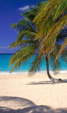 Seven Mile Beach, Grand Cayman island  http://www.vacationrentalpeople.com/vacation-rentals.aspx/World/Caribbean/Cayman-Islands