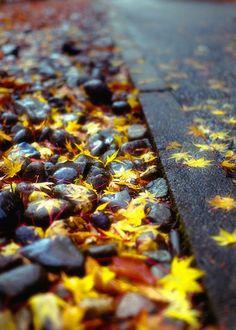 wet golden leaves....