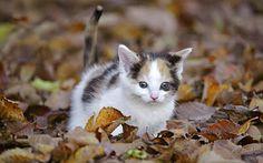FotoFrontera: Para quienes adoran los gatitos.