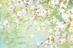 blanc saison de floraison