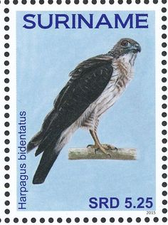 Double-toothed Kite stamps - mainly images - gallery format