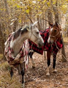 WSH♥ well dressed horses in tartan     #tartan #williams-sonoma #horse