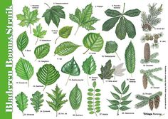 All Nature, Amazing Nature, Science For Kids, Science And Nature, Garden Art, Garden Plants, Montessori, Leaf Identification, Educational Crafts