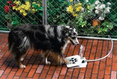 Need this gadget — the pet fountain connects to the garden hose.