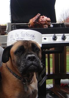The best of dog shaming - Part 9 - FB TroublemakersFB Troublemakers