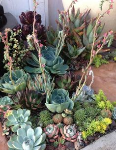Incredible Front Yard Landscaping Ideas Pretty little corner garden of succulents.Pretty little corner garden of succulents. Succulent Landscaping, Succulent Gardening, Cacti And Succulents, Front Yard Landscaping, Planting Succulents, Garden Plants, Planting Flowers, Landscaping Ideas, Succulent Terrarium
