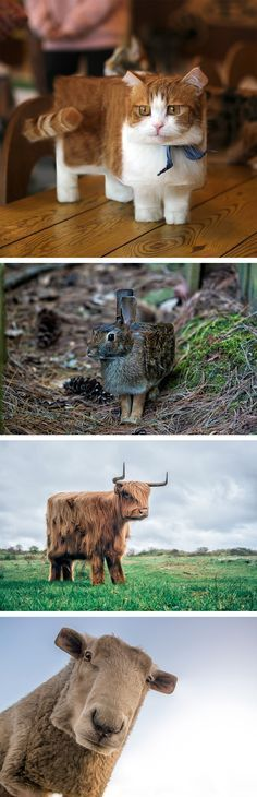 Photos of Animals Retouched to Look Like Real-Life Minecraft Creatures Minecraft Real Life, Amazing Minecraft, Minecraft Memes, Minecraft Crafts, Minecraft Houses, Minecraft Stuff, Funny Animal Photos, Funny Animal Memes, Funny Animals