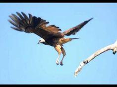 Asonance - Ptákům těm křídla nevezmou - YouTube Bald Eagle, Bird, Youtube, Animals, Musik, Animales, Animaux, Birds, Animal