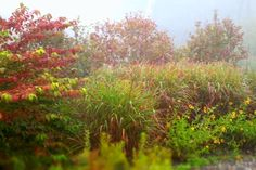 """Autumn is a Second Spring, When Every Leaf is a Flower"" - Camus  Garden Design/Photography: michaela medina harlow @ thegardenerseden.com"