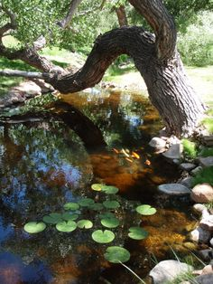 Natural pond created and maintained by Bosque Natural in Santa Fe, NM.