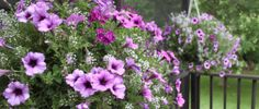 Keeping Potted Plants and Hanging Baskets Beautiful All Summer Long At The Farm --Posted on June 22, 2014 by oldworldgarden