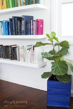 blue crate planter in living room & books by color!