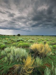 Storm Clouds and Sage, New Mexico
