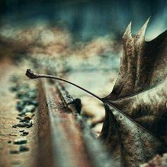 . Y afrontamos retos y superamos miedos y avanzamos, y retrocedemos, y  nos contradecimos,  y disfrutamos, y sufrimos, y amamos, y nos arrepentimos, y vivimos y seguimos viviendo.  Subidos a este maravilloso tren, llamado vida, parando en estaciones y apeaderos con mayor o menor agrado, y agrado, nuestra existencia se desarrolla, cambia se transforma y evoluciona.  Solo un carburante, el amor a uno mismo, a los demás y a la vida, solo un gran peligro, el miedo, el miedo a nosotros mismos…