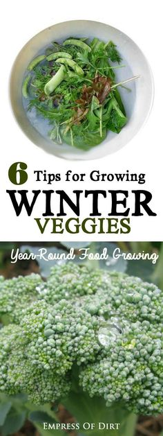 When planning a vegetable garden, be sure to include the cold-loving veggies like broccoli, kale, Brussels sprouts, and leafy greens. These grow very nicely in cold climates during the fall and winter months. We've got 6 helpful tips to get you started. #sponsored