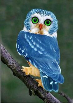 ♡♥Blue owl with green eyes! - click on pic to see a full screen pic in a better looking black background♥♡