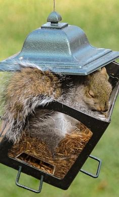 """Why do people get so upset when squirrels get the birdseed?  """"squirrels need to eat too. Love this little darling."""