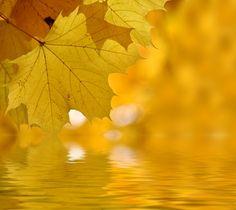 Golden Light #photos, #bestofpinterest, #greatshots, https://facebook.com/apps/application.php?id=106186096099420