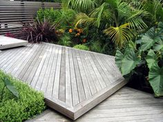 Stepped decking, screen and sub-tropical planting design  www.seedlandscapes.co.nz
