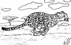 Image result for cheetah adult colouring picture