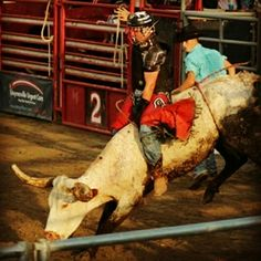 GREAT STRAIGHT 8 Bull Riding Rodeo Photo by Rider Evan Thrasher @rodeo_life23 https://www.instagram.com/rodeo_life23/ Team Cowboy Coffee Chew #rodeo #Cowboys #bullriding